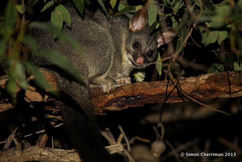 Hills Cat Food >> Mardo Reserve 3